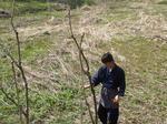 タラの芽.JPGのサムネール画像